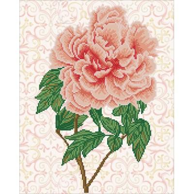 Rose blush