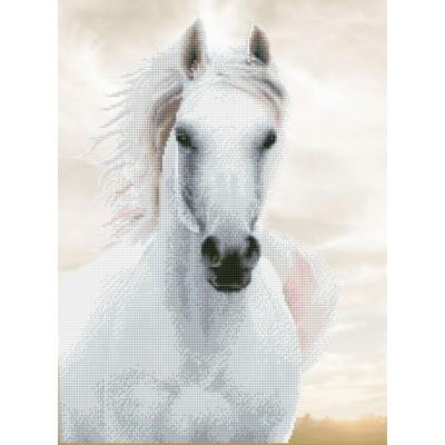Imperial stallion