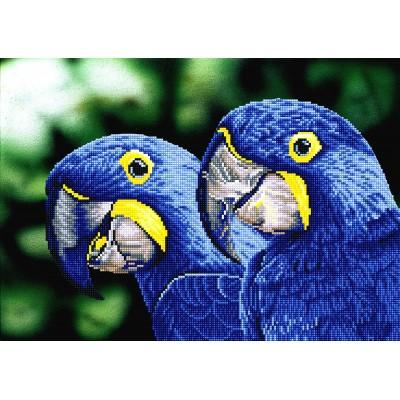 Blue Hyacinth Macaws